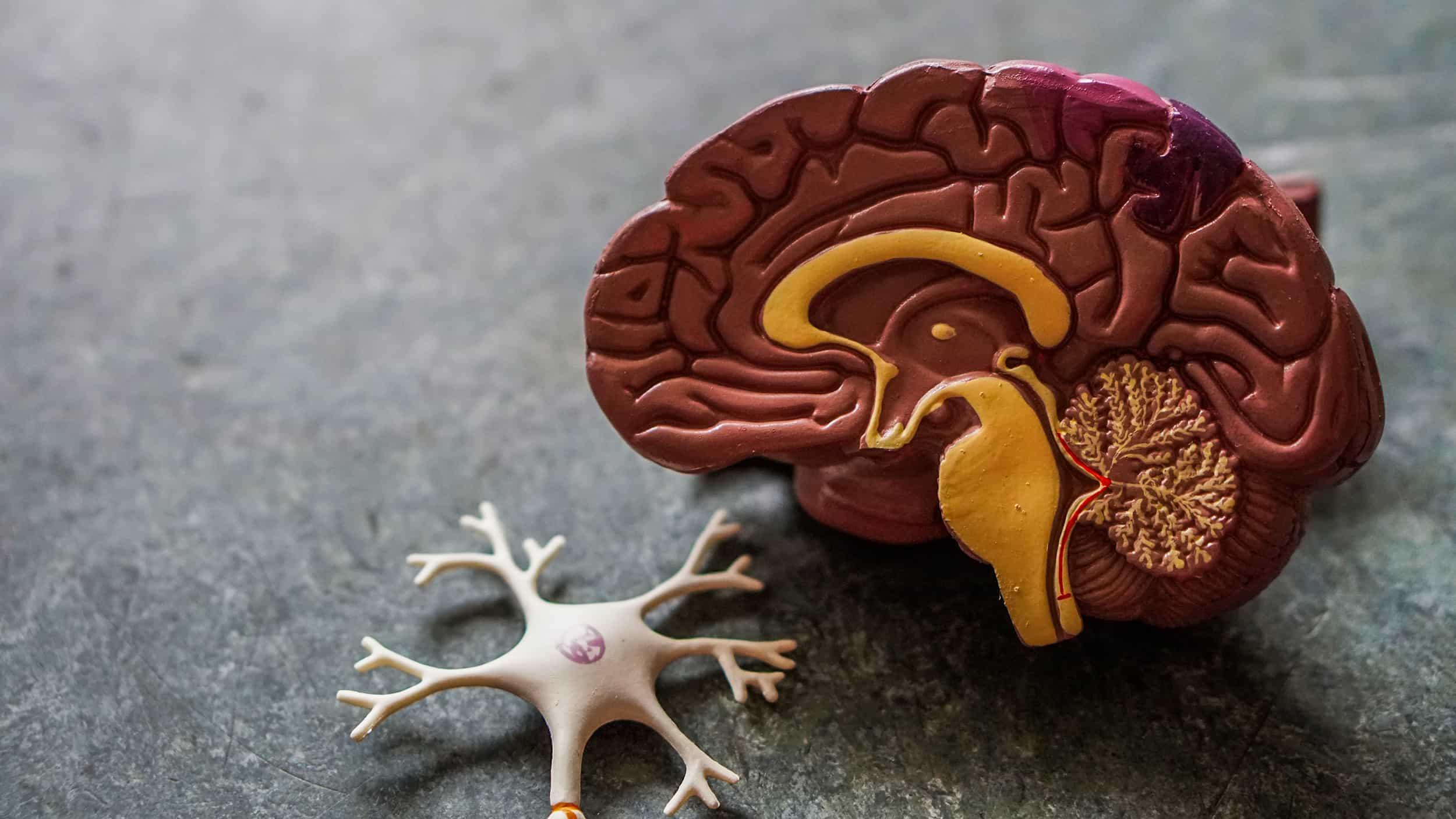 Brain Functioning on Keto, Ketorets by Rahul Kamra